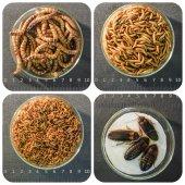 Nabídka krmného hmyzu