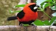 Welt Vogel Park Walsrode
