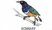 Pět let činnosti spolku SCHHAPP
