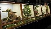 Výstava hmyzožravého a plodožravého ptactva